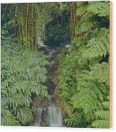 100837-bamboo And Ferns Creek  Wood Print