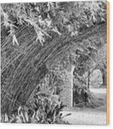Bamboo Black White Rip Van Winkle Gardens  Wood Print