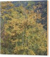 Bamboo Forest In The Fall Wood Print