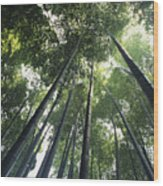 Bamboo Forest Wood Print by Mitch Warner - Printscapes