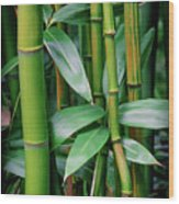 Bamboo Green Wood Print