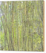 Bamboo In San Diego Zoo Wood Print