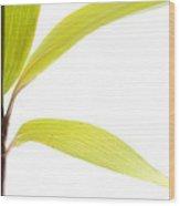 Bamboo Meditation 2 Wood Print by Carol Leigh