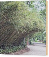 Bamboo Overhang Path  Wood Print