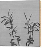 Bamboo Shutes Wood Print