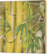 Bamboo Stalks Wood Print