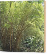 Bamboo Trees In Garden Of Eden Wood Print