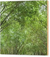 Bamboo Trees In Wangjianglou Park In Chengdu China Wood Print