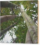 Bamboo View Wood Print