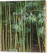 Bamboo Wind Chimes  Waimoku Falls Trail  Hana  Maui Hawaii Wood Print