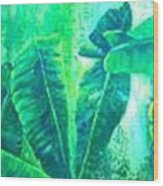 Banan Leaves 5 Wood Print
