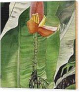 Banana Blossom Wood Print