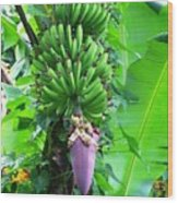 Banana Flower Wood Print