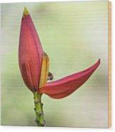 Banana Flower Bud  Wood Print