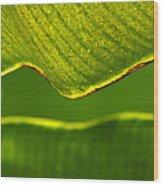 Banana Leaf Lines Wood Print