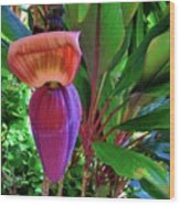 Banana Plant Flower And Leaves Wood Print