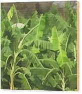 Banana Plantation Wood Print