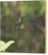 Banana Spider In Web Wood Print