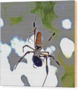 Banana Spider Lunch Time 1 Wood Print