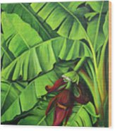Banana Tree Flower Wood Print