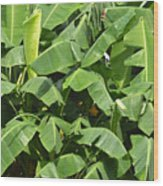Banana Trees Wood Print