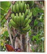 Bananas In Africa Wood Print