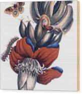 Bananas (musa Paradisiaca): Wood Print
