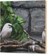 Bandit Birds Wood Print