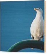 Bandon Seagull. Wood Print