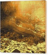 Banishing Rain Forest Shadows Wood Print