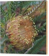 Banksia Nivea - 2 Wood Print