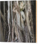 Banyan Grows Over Statue Wood Print