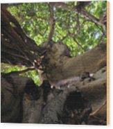 Banyan Sky Wood Print