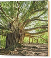 Banyan Star Wood Print