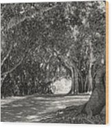 Banyan Street 3 Wood Print