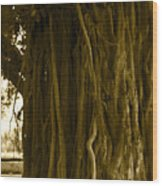Banyan Surfer - Triptych  Part 1 Of 3 Wood Print