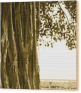 Banyan Surfer - Triptych  Part 2 Of 3 Wood Print