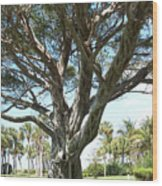 Banyan Tree Wood Print by Anna Villarreal Garbis