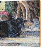 Banyan Tree Bull Wood Print by Claudio  Fiori