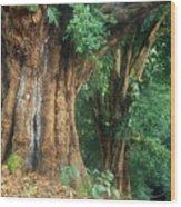 Banyan Tree Haleakala National Park Wood Print