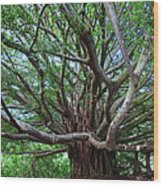 Banyan Tree Wood Print
