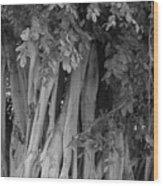 Banyans Wood Print