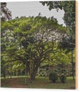 Banyon Monkeypod Landscape II Wood Print