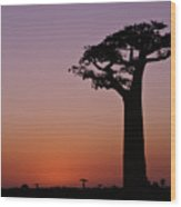 Baobab At Sunset Wood Print