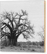 Baobab Landscape Wood Print