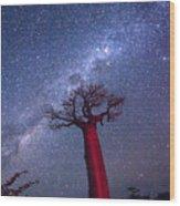 Baobab Milky Way Wood Print