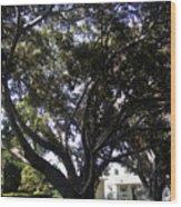 Baobab Trees In Los Angeles Wood Print