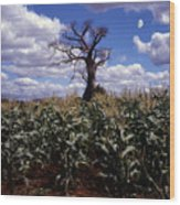 Baobaba Tree Wood Print