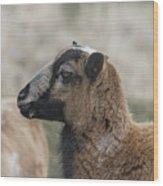 Barbados Blackbelly Sheep Profile Wood Print