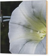 Barbed Flower Wood Print